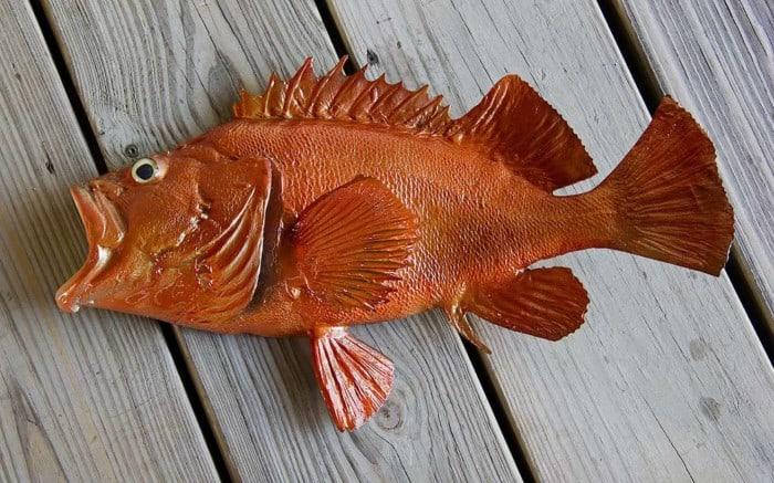 Ikan Terlangka Redfish Acadian