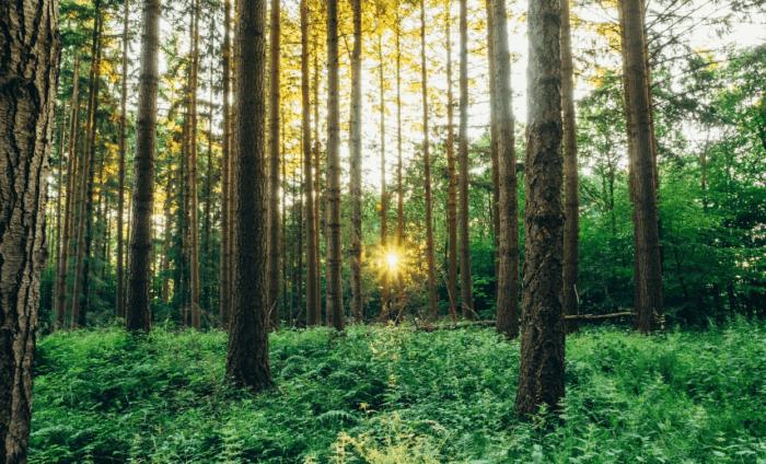 17 Fungsi Hutan Lindung | Pengertian, Gambar & Contoh [Lengkap]