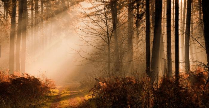 Manfaat Hutan Lindung Indonesia