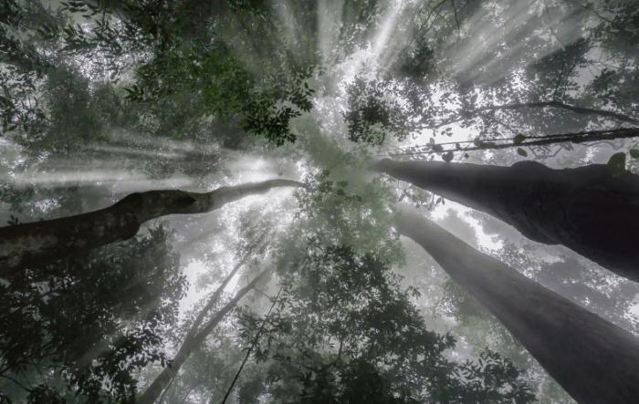 Fungsi Hutan Lindung
