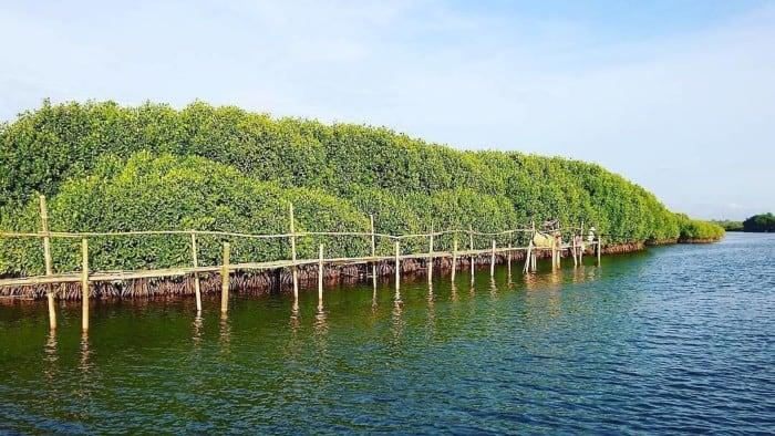 Pengertian Hutan Mangrove