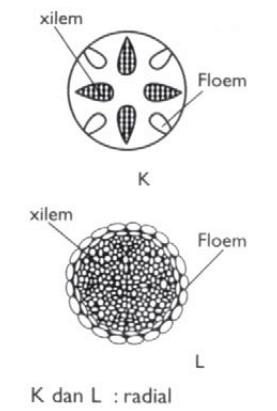 Struktur Sel Floem