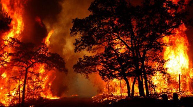 Artikel Bencana Alam