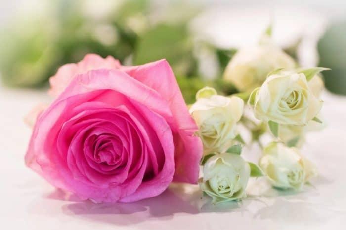 1000+ Kata Kata Ali Bin Abi Thalib Kehidupan / Kematian / Wanita