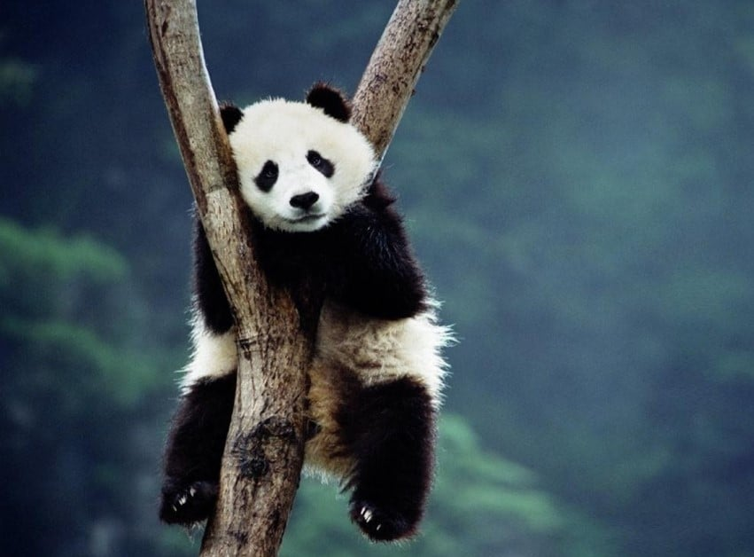 Gambar Kartun Panda Tidur Lucu Gambar Viral Hd
