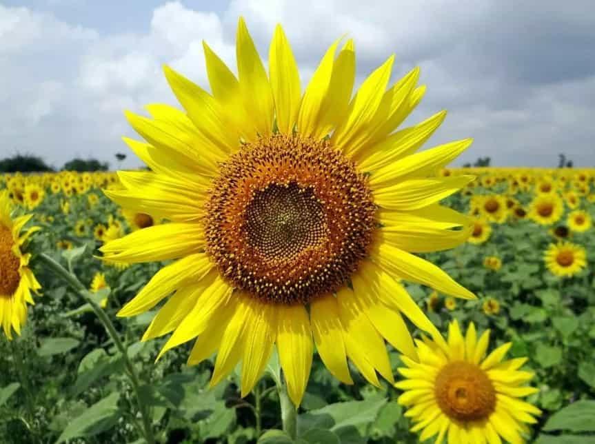 40 Gambar Bunga Cantik Indah Bagus Comel Foto Wallpaper Hd