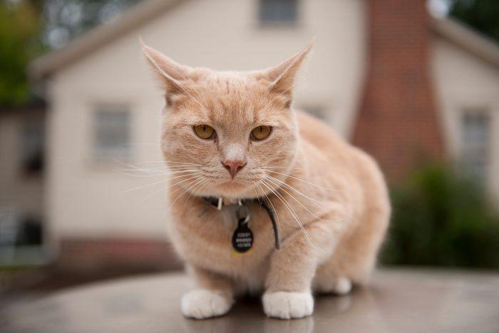 100 Nama Kucing Jantan Betina Lucu Bagus Anti Mainstream