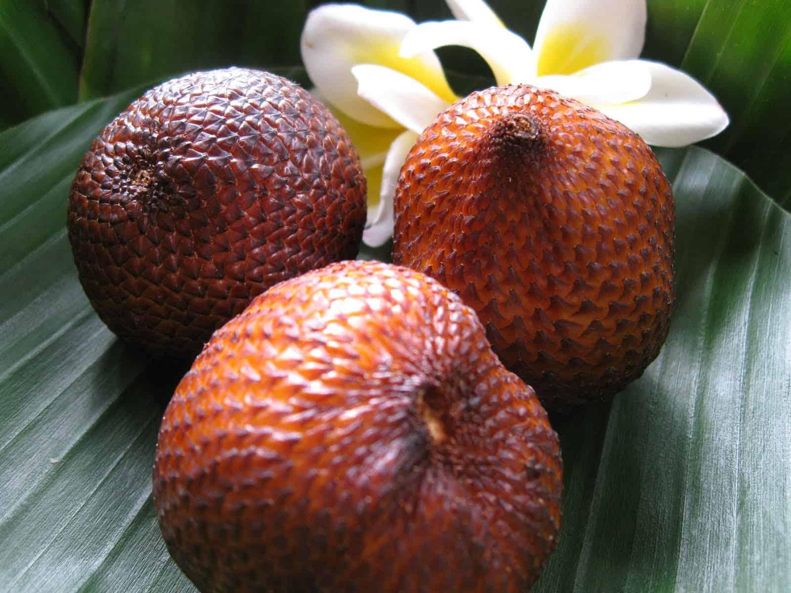 gambar Salak Bali