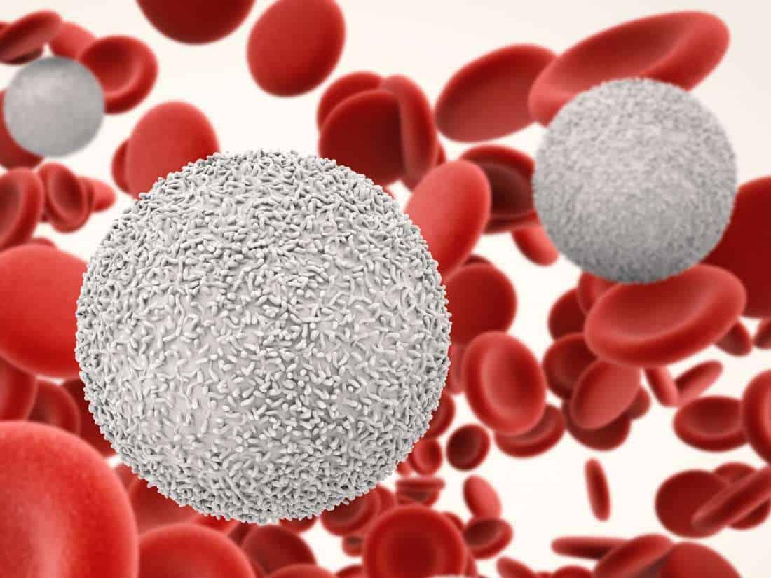 gambar darah