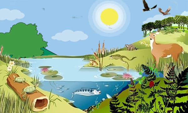 gambar ekosistem