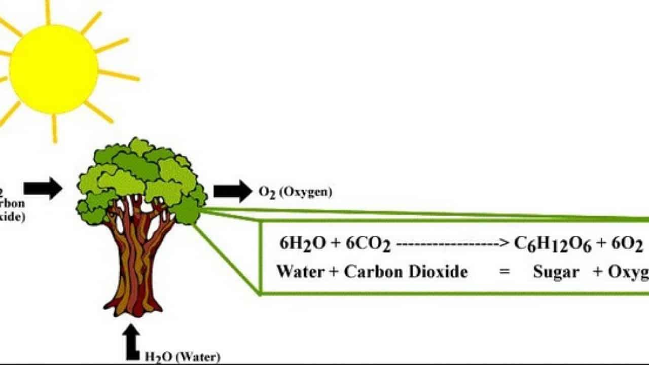 gambar fotosintesis