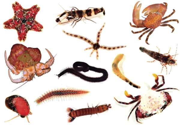 gambar sistem gerak pada hewan